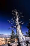bryce stump